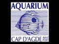 Jusqu'à 70% de réduction! Peut-être prochainement Aquarium Marin Du Cap D'Agde?