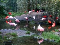 Zoo Rheine