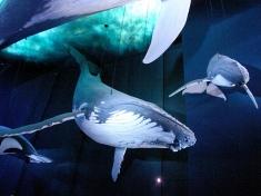Aquarium Stralsund