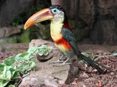 Zoo Veldhoven Nederland