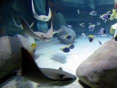 Aquarium Castelnuovo del Garda