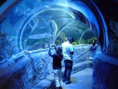 Aquarium Speyer