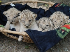 Tierpark Stadt Haag