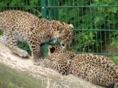 Zoo Haag