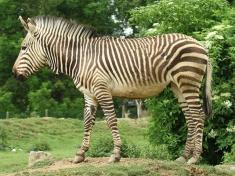 Zoo Stubenberg