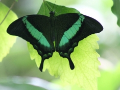 Vlinderparadijs Papiliorama Nederland