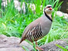 Weltvogelpark Walsrode Deutschland