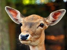 Zoo Rosengarten- Vahrendorf