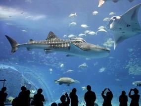 logo Zoo Aquarium Berlin