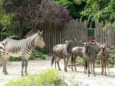 Zoo Landau in der Pfalz