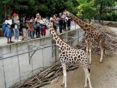 Zoo Schmiding Österreich