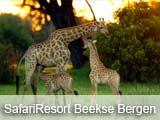 SafariResort Beekse Bergen