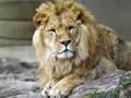 Win: 4 tickets voor een dierentuin naar keuze t.w.v. max €110!
