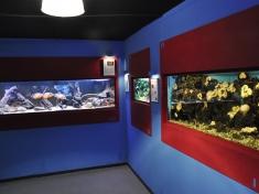 Aquarium Leerdam