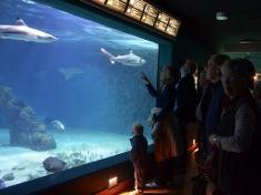 Aquarium Wilhelmshaven Deutschland