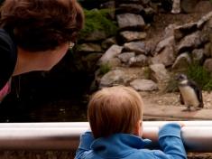 Burgers' Zoo Nederland