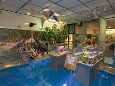 Museum Den Haag