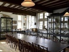 Natuurhistorisch Museum Maastricht Nederland