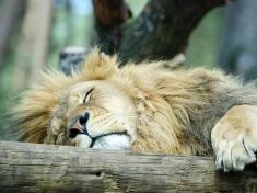 Safaripark Stukenbrock Zoo Deutschland