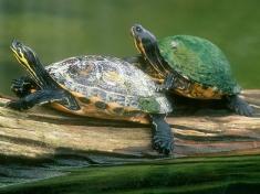 Schildpaddencentrum