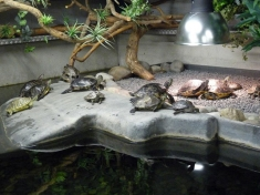 Schildpaddencentrum Nederland