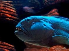 Aquarium Königswinter
