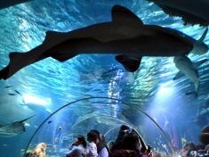 Aquarium Konstanz (stad)