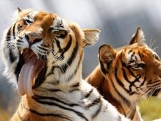 Zoo Dassow