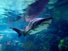 Zoo Aquarium Berlin Deutschland