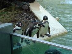 Zoo Eberswalde Deutschland