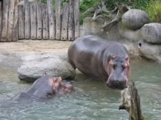 Zoo Karlsruhe