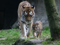 Zoo Krenglbach
